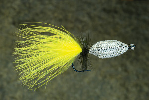 Simple Shiner Fly