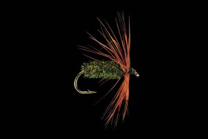 Brown Hackle Peacock Fly