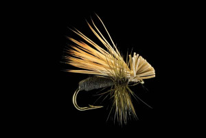 Kingrey's Better Foam Caddis (Black) Fly