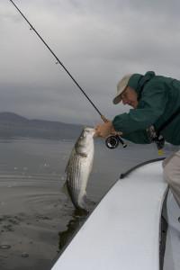 Lake Striped Bass Fishing