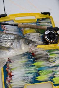 Striped Bass Flies