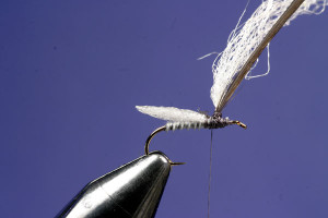 Making A Caulk Midge Fly: Step 6