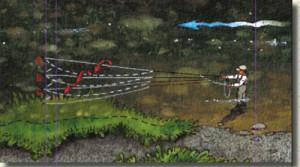 Illustration: Fly Fishing Streamer