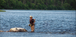 Labrador Atlantic Salmon Fishing