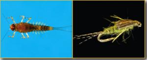 Baetis Nymph Fly