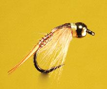 Gabriels Trumphet Fly