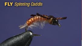 Net_Spinning_Caddis