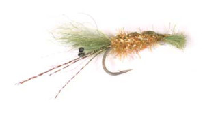 Spartina Grass Shrimp