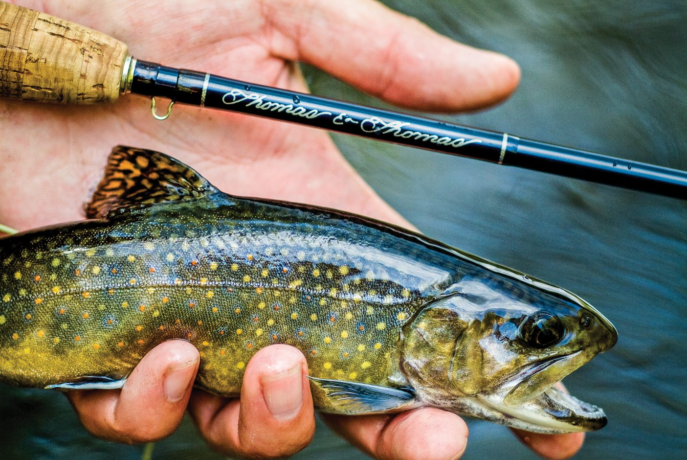 Hand holding brook trout and fly rod