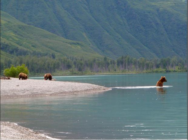 All Alaska Outdoors Lodge