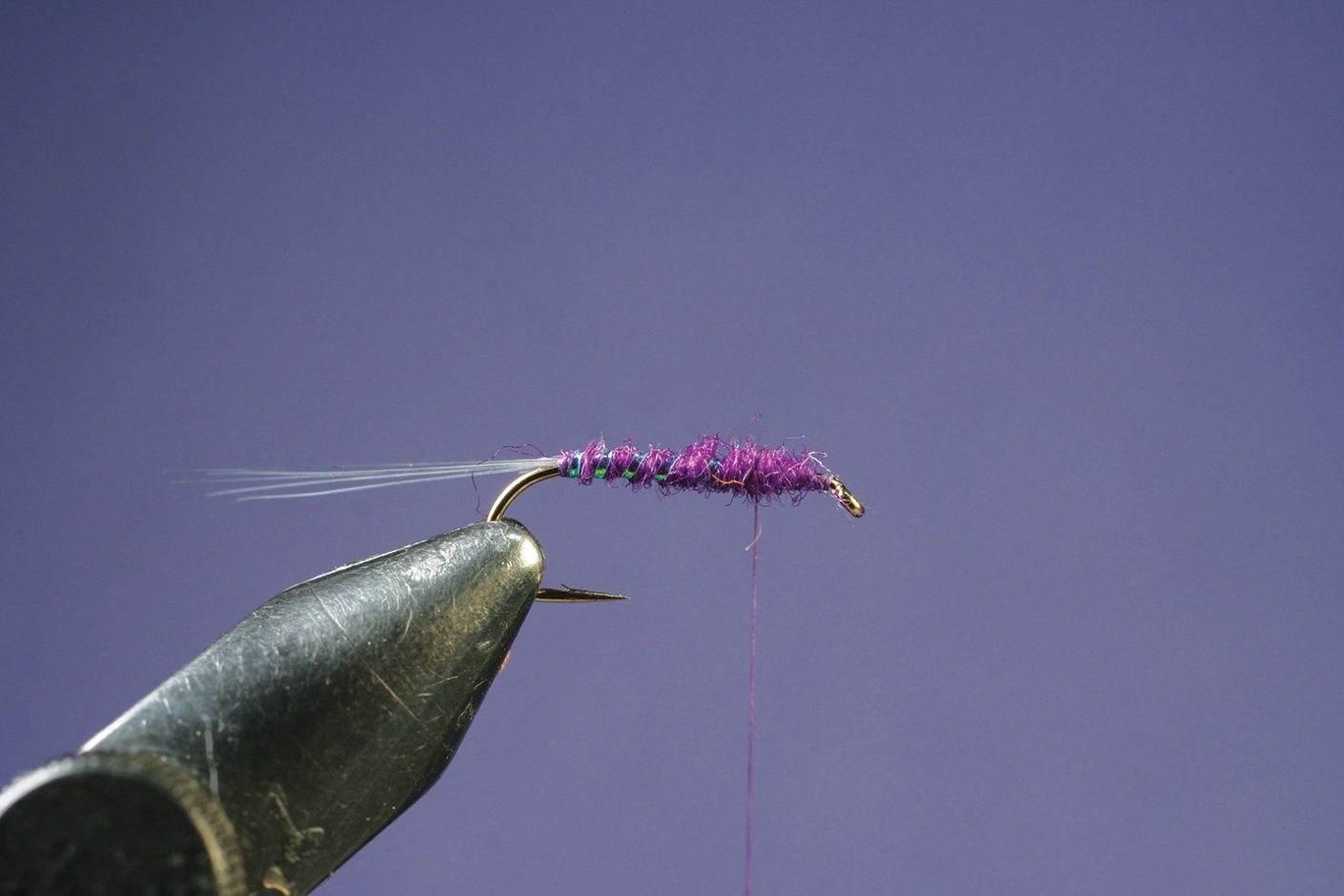 Dub thorax on Purple PFD Parawulff fly