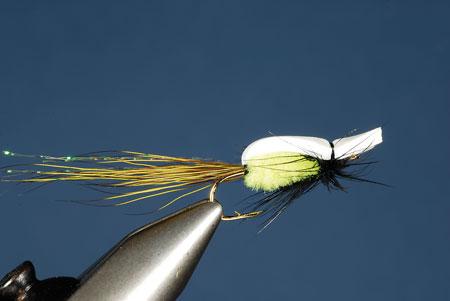 Panny Popper fly