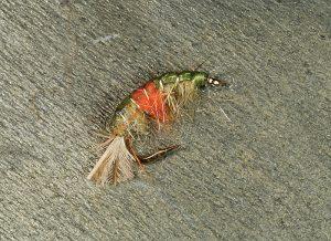 Hot Spot Scud fly