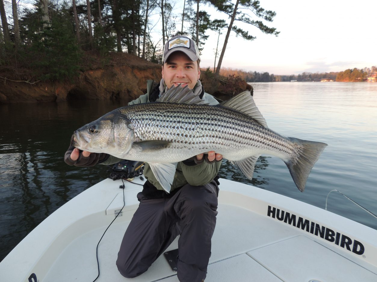 Sodium free stripers tactics maps american for Sodium fishing gear
