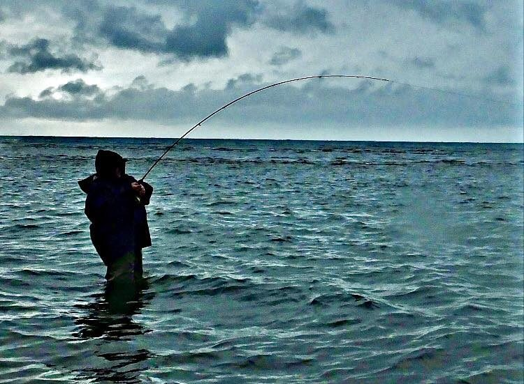 flats fly fishing for striped bass