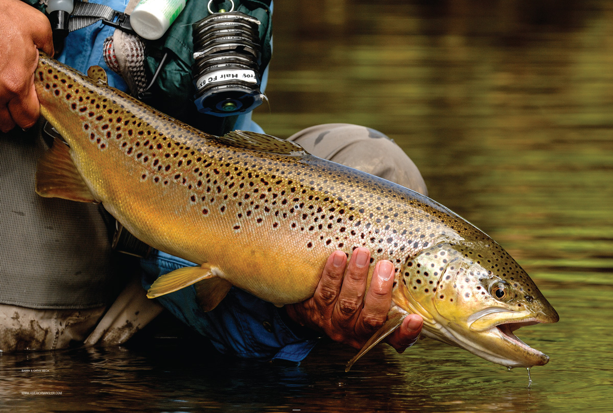 the latest 2f6db d0d78 September Trout - American AnglerAmerican Angler