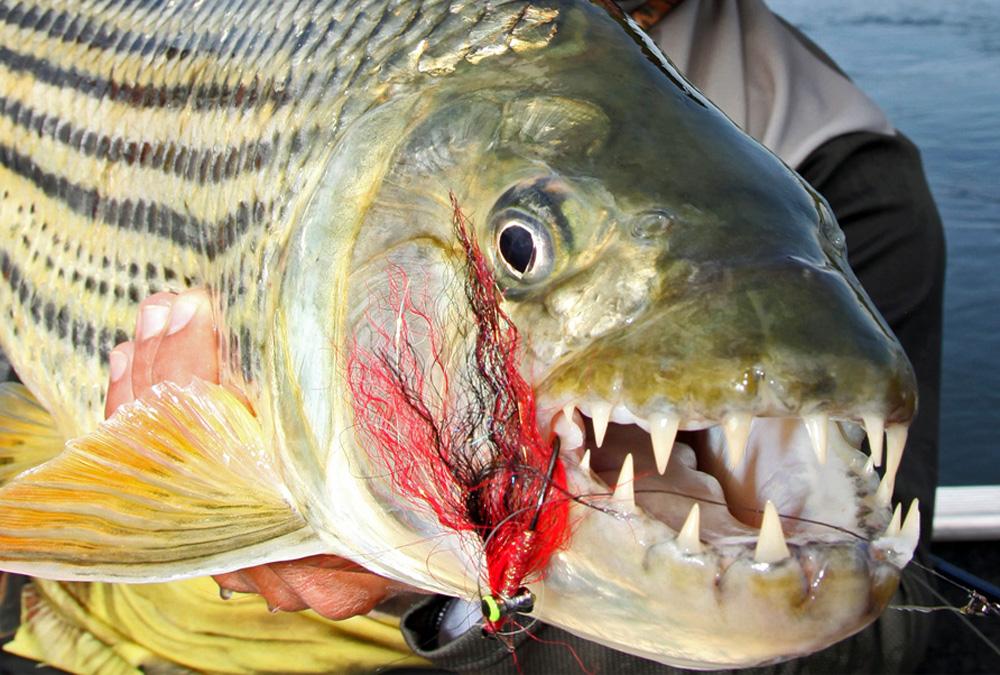 Рыбы азовского моря названия и фото кнопок как